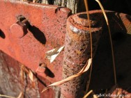 Rusty hinge and dry wisps of not-so-long-ago-alive grass.