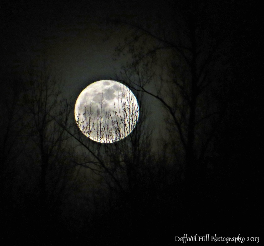I took this with my Canon SX260 on a tripod.