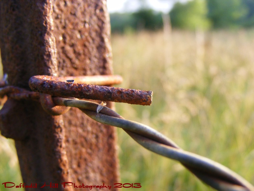 I have a FujiFilm S700 my dad gave me and I used that for this shot. I by the way love taking pictures of rusty things!