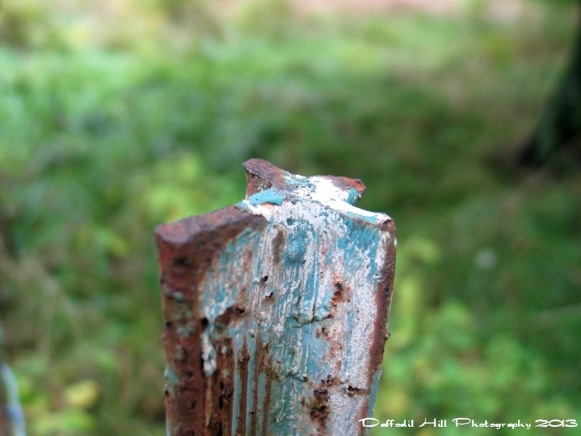 A Capture of an old fence post, taken with my old PowerShot G3