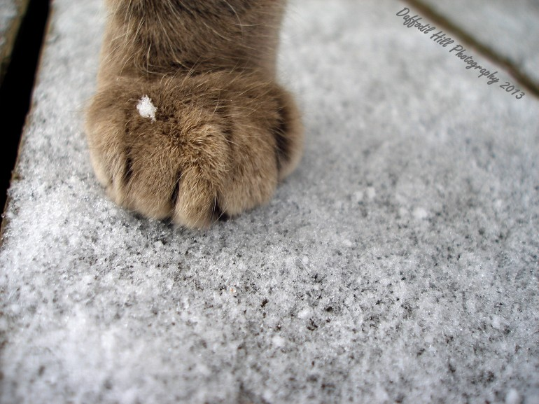 Lovely paw of love.